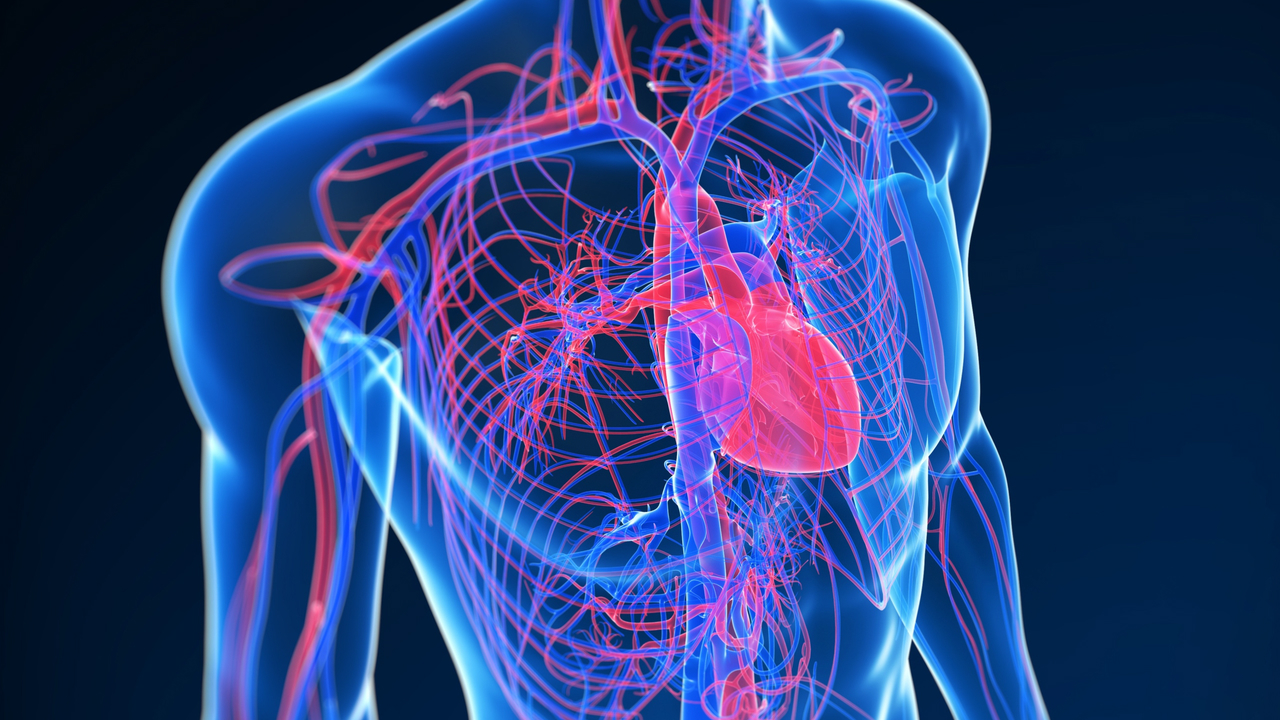 Evaluation of perfusion and viability of myocardium • Monitoring of the results of treatment of coronary artery disease • Myocardial scintigraphy with exercise stress tests